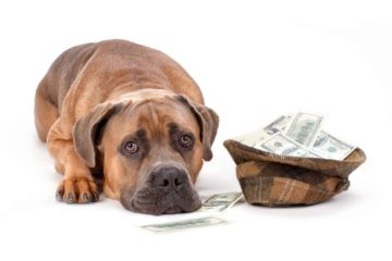 Dog-with-Money-Don't-Undercut-Pricing