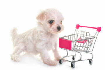 Find Your Pet Target Market